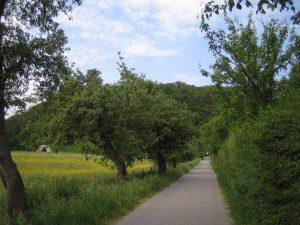 Birnbaum-Allee Papendelle in Alt-Erkrath (Foto: Uli Schimschock)